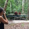 private tour orangutan open trip